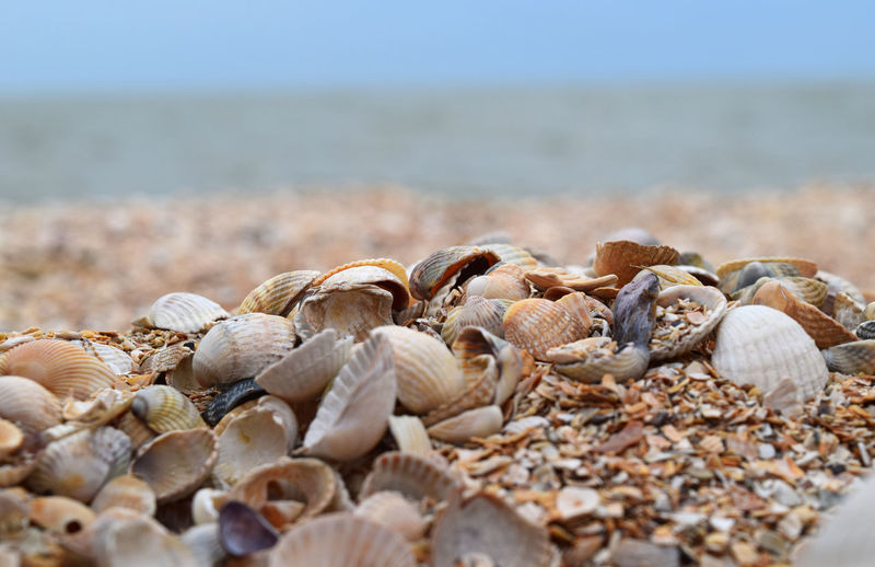Beach Life Abundance Animal Shell Animal Wildlife Azovsea Beach Beauty In Nature Beauty In Nature Close-up Day Food And Drink Land Large Group Of Objects Nature No People Scenics - Nature Sea Sea And Sky Seascape Seashell Selective Focus Shell Surface Level Tranquility Water