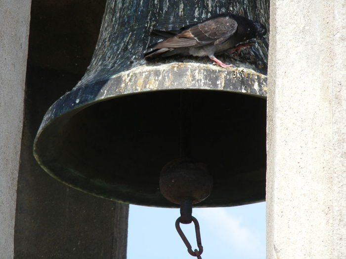 EyeEmNewHere Hide Himself By The Bell Bird Close-up Nature One Animal