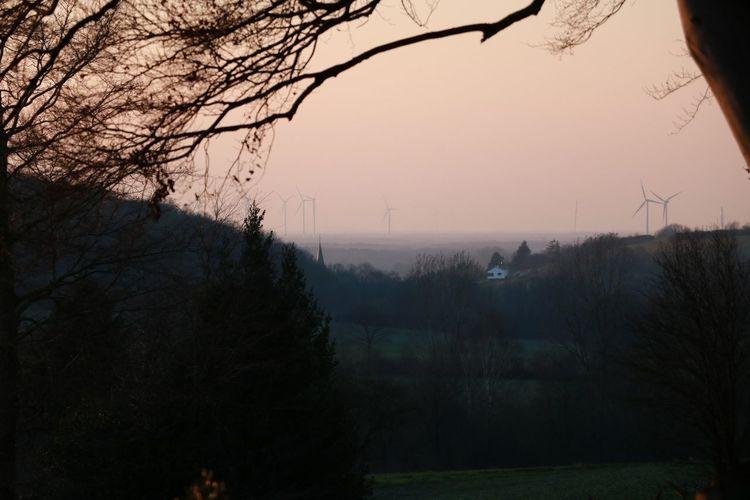 Tree Fog Smog