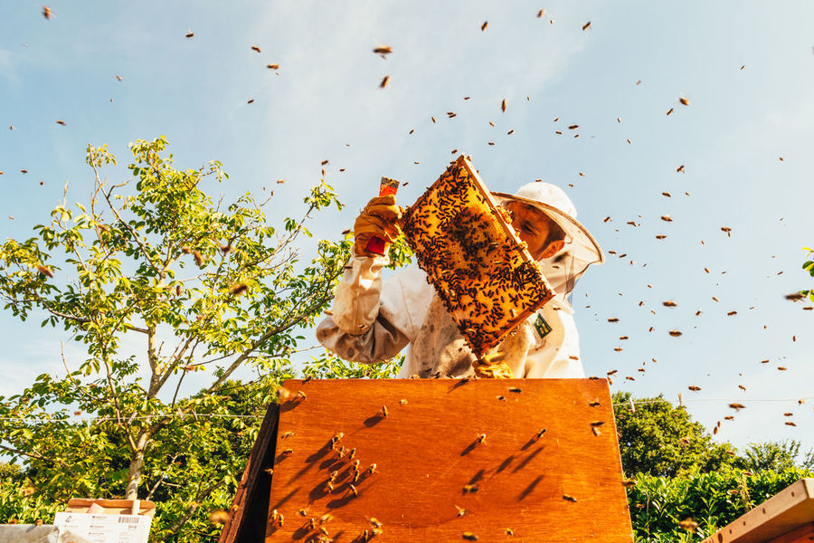 The Week On EyeEm Healthy Smoker Beeswax Organic Insect Bees Food Honeycomb Honey Production Real People Honey Bees Keeping Production Extraction Beekeeper Beekeeping Agriculture Honey Bee Beehive Pollen Apiary Hive Occupation Nest