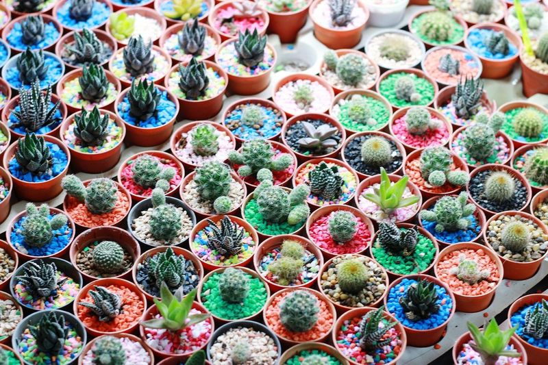 High angle view of succulent plants in market