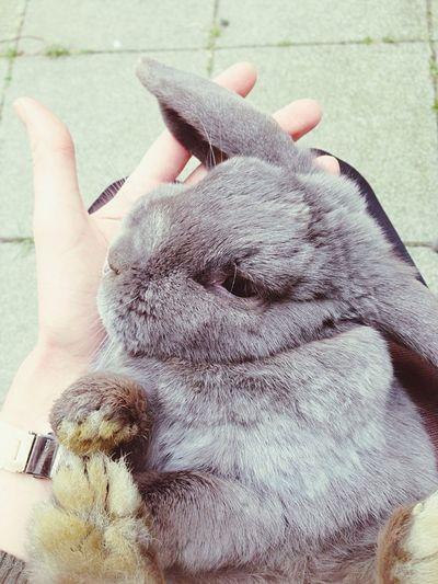 My Sweet Baby Bunny Love Cute Pets Sweet Bunny Love ♥