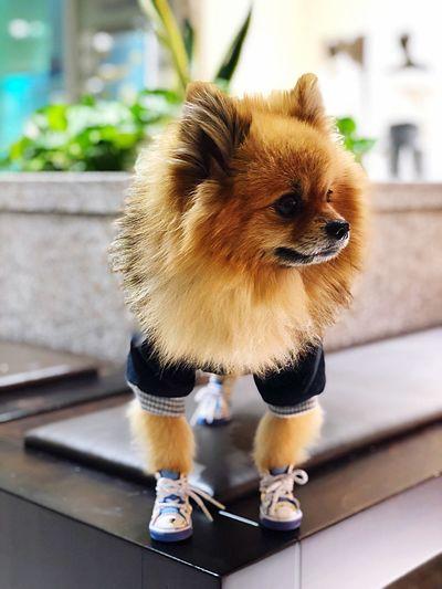 Pets Mammal Dog