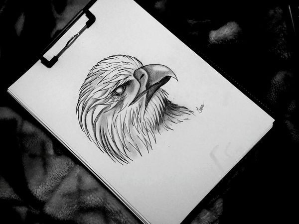 June Art, Drawing, Creativity Eagle рисую Drawing Art