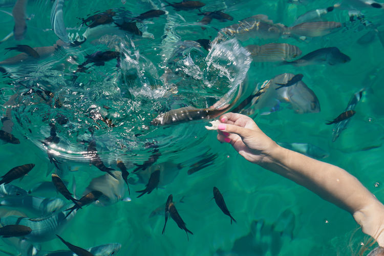 The hand of a young white woman feeding tropical fish in the aegean sea