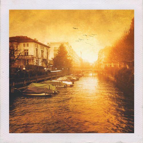 Birds in the evening sun Birds Sunset Sun Zürich Gold Golden Trees Romantic Water Winter
