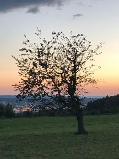 Beauty In Nature Tree Landscape Nature Sunset Tranquility Single Tree Grass Sky Lone Scenics Tranquil Scene Field Outdoors No People Tree Trunk Day