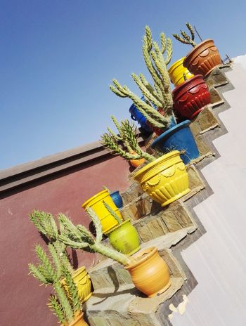 Color Colors Cactus Multi Colored Pot Clear Sky Sky Plant Freshness Greenhouse Cactus No People Stairs Marrocco