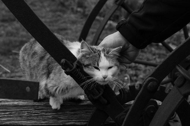 Animals Blackandwhite Cat Cats Of EyeEm Close-up Cuddles Cuddling Domestic Animals Homestead Human Hand