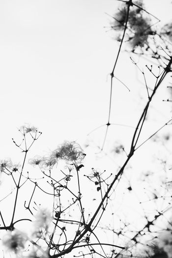 Lauraloophotography Grass Blackandwhite Grasses Nature Beauty In Nature Nature Sky Day
