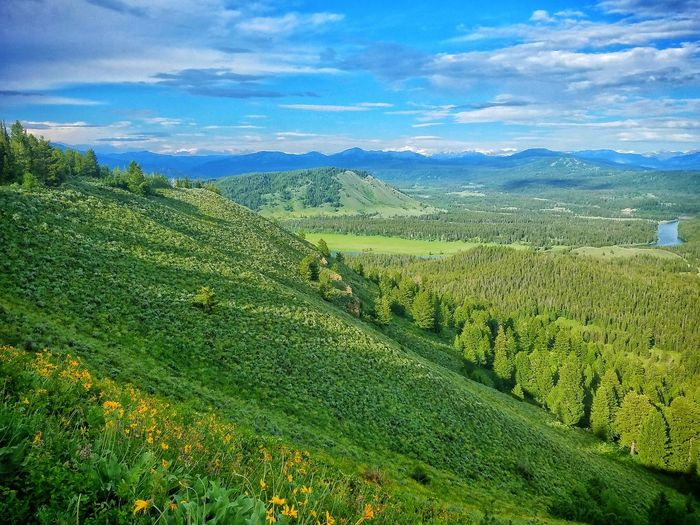 Nature overload. Agriculture Nature Green Color Rural Scene Field Landscape Beauty In Nature Scenics Growth Day Idaho Grass Outdoors Freshness Mountain Range No People Mountain SkyCool Freelance Hills Dandelions Trees Clouds