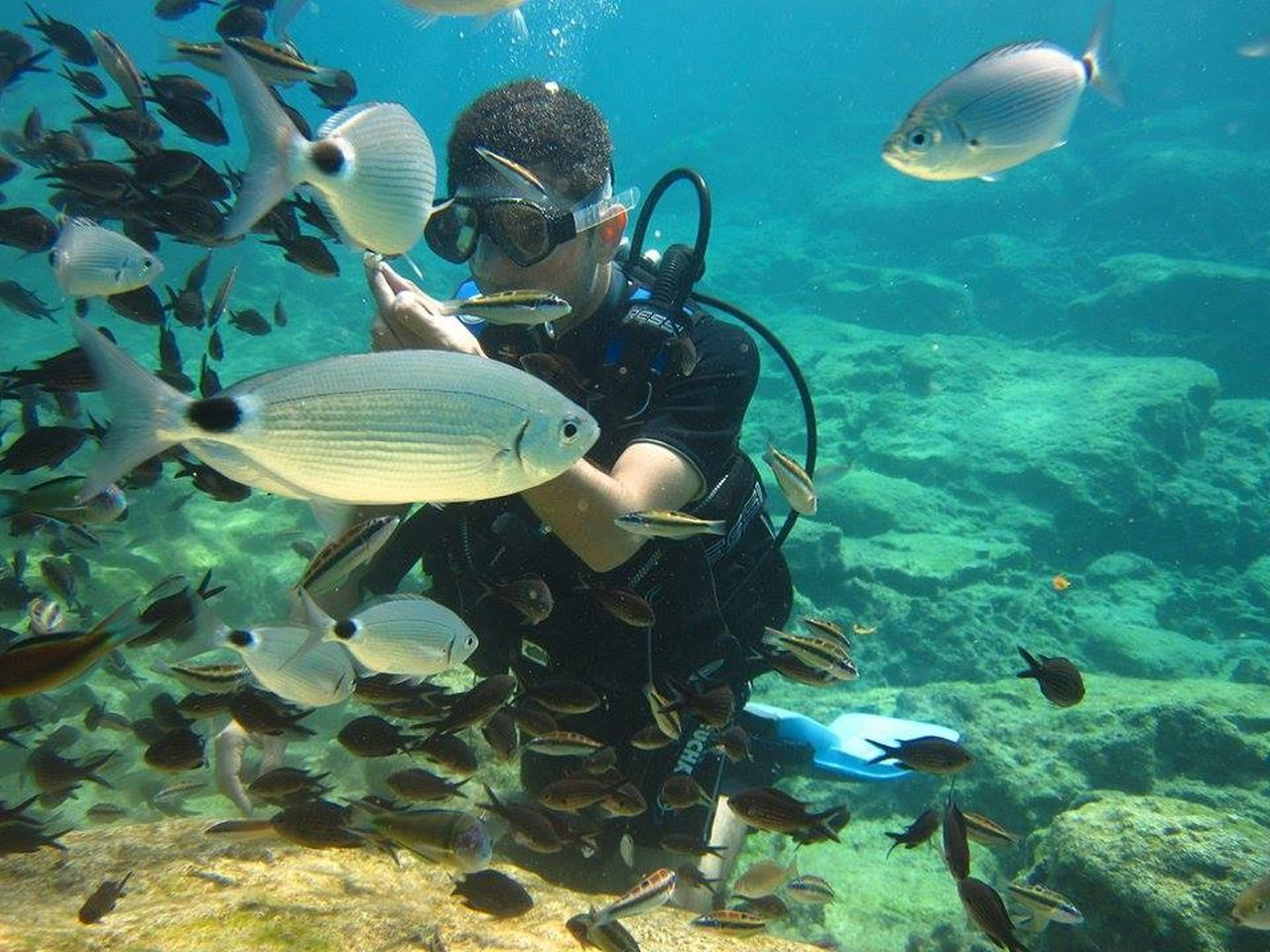 underwater, animal themes, swimming, fish, undersea, sea life, animals in the wild, one person, coral, one animal, animal wildlife, water, sea, real people, scuba diving, day, nature, outdoors, young adult, people