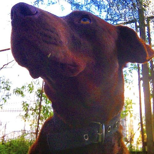 Perrosdeinstagram Perro sasha ernestina oteando el horizonte...