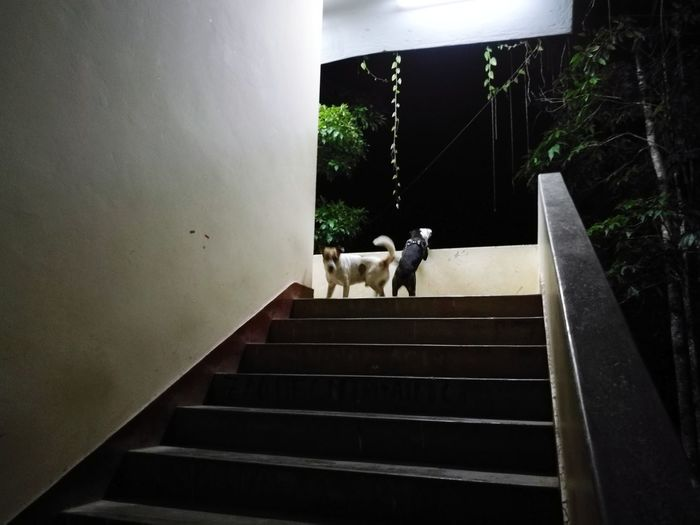 bebés 🖤🖤 Staircase Steps Steps And Staircases Indoors  No People Day Domestic Animals