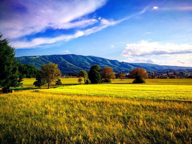 Our hill. 🏔 Hill Pohorje Slovenia Visitslovenia IfeelsLOVEnia Maribor Pohorje Maribor Field Joy Escape Warm Amazingview