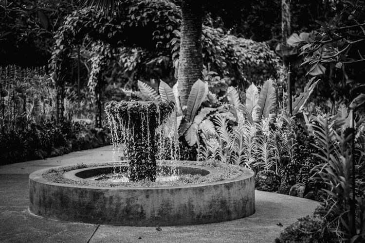 Fountain against trees and plants