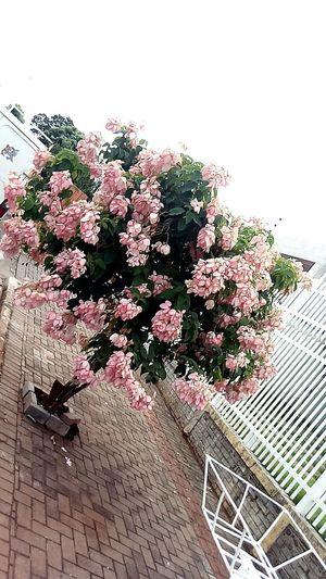 Millennial Pink Flower Nature Beautiful !!!♥♥