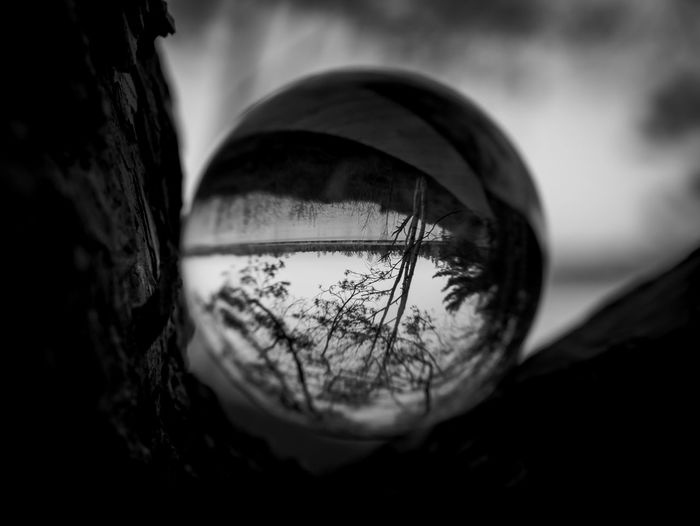 Close-up Reflection Selective Focus Tree Focus On Foreground Nature No People Day Outdoors Geometric Shape Body Part Sky Single Object Circle Glass - Material Still Life Shape Eye