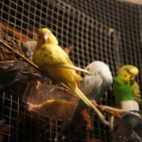 Royalfloria Bird Nex5 Sony