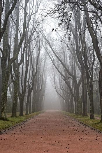 Dome Fog Gloomy