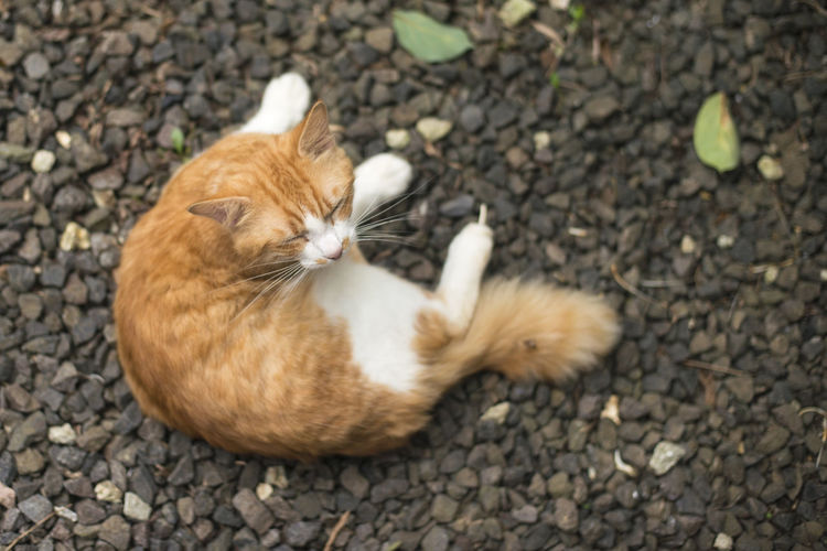 playful cat Background Beautiful Cat Cute Domestic Animals Happy Isolated Looking Orange Color Pet Playful Playful Cat Relaxing Moments White Young Animal