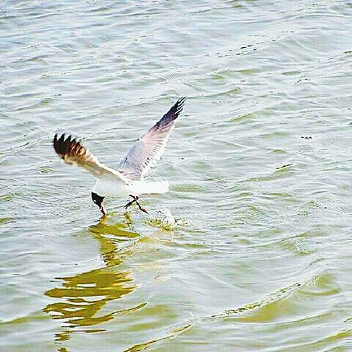 old 5 megapixel cellphone shot Life Oneloveva Nature Flyaway Beautiful Bird Photography Fowl Water Gull