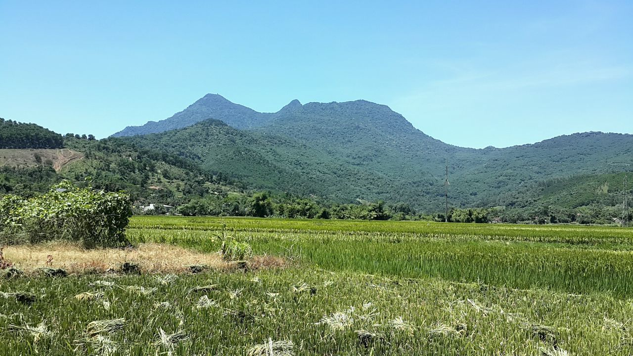 tranquil scene, nature, mountain, tranquility, landscape, scenics, beauty in nature, field, clear sky, no people, agriculture, day, growth, grass, outdoors, mountain range, rural scene, tree, sky, rice paddy