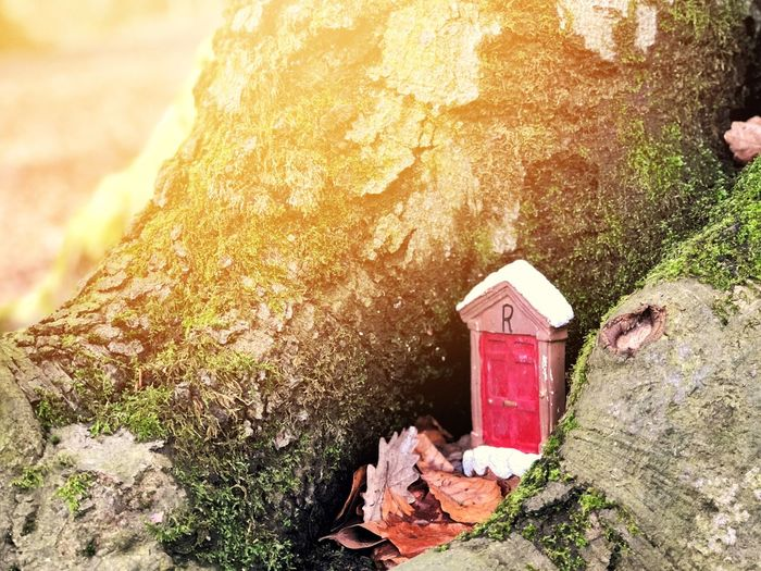 Behind Closed Doors... Sunshine Sunlight Warley Woods Bearwood Fairy Door Fairy Doorway Door Day Rock - Object Outdoors Tree Trunk No People Nature Sunlight
