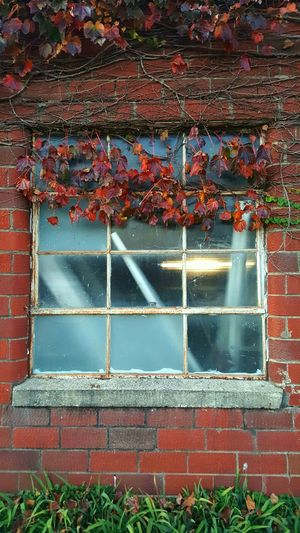 Window Brick Walls Foliage, Vegetation, Plants, Green, Leaves, Leafage, Undergrowth, Underbrush, Plant Life, Flora Architecture Outdoors No People Built Structure Day Nature