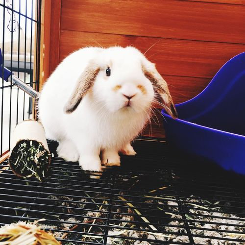 Portrait of white rabbit in cage