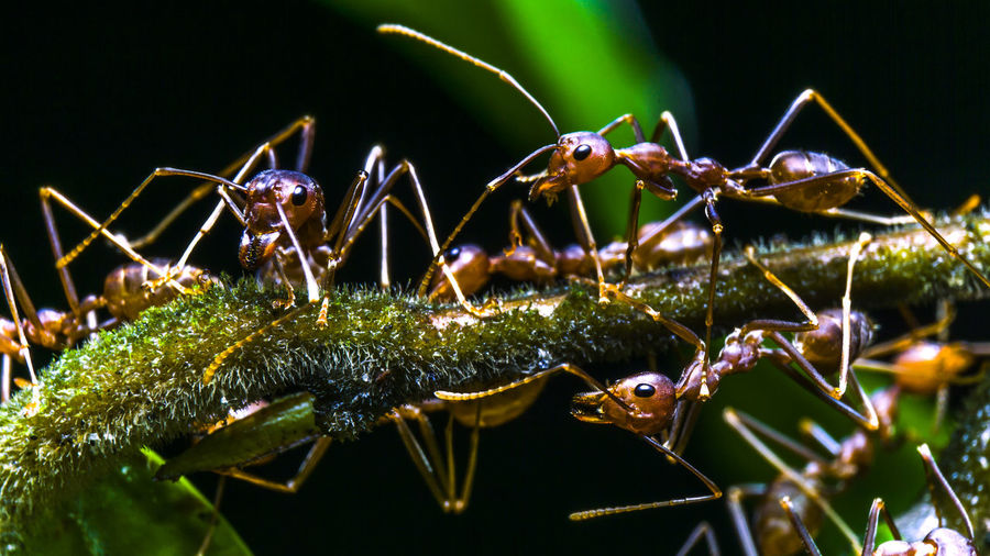 Close-Up Of Ants On Plant At Night