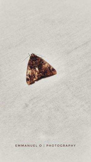 crossed butterfly Wallpaper Congolese Insect Beauty In Nature Climbing Rise Up Close Street Photography Up EyeEm Selects Urban Nature Abstract Photography Mobilephotography Architecture Urban Insects Macro Butterfly Butterfly - Insect Collection Napkin Cloth White White Background Close-up Textured  Rough Rugged Detail LINE Go Higher This Is Queer Inner Power