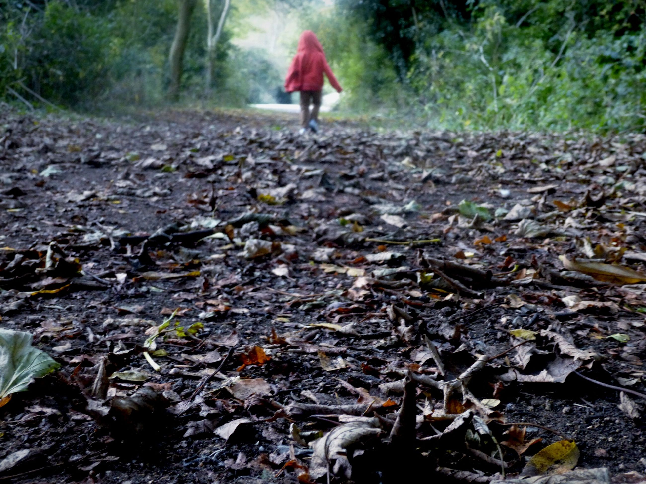 autumn, leaf, lifestyles, tree, change, forest, fallen, leisure activity, nature, day, standing, walking, outdoors, falling, dry, season, leaves, field