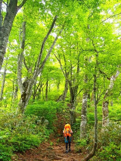 2012.5.26荒島岳 Forest Outdoors Beauty In Nature Hiking Mountain Tree Verdure Japan 新緑 ブナ 荒島岳