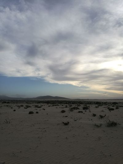 Flamingo Sand Desert Beach Low Tide Sand Dune Water Arid Climate Sky Landscape