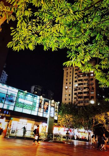 Shanghai Night Tree Plant Group Of People Architecture Built Structure Real People Illuminated