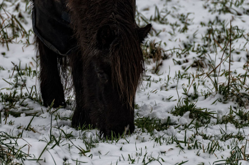 amigo December Farmland Pony Animal Themes Close-up Cold Temperature Day Domestic Animals Field Horse Mammal Nature No People One Animal Outdoors Pets Snow Weather Winter