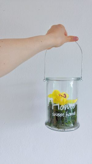 Human Hand Jar Water Close-up Flower In A Jar One Flower Head Yellow Flower Present For Me