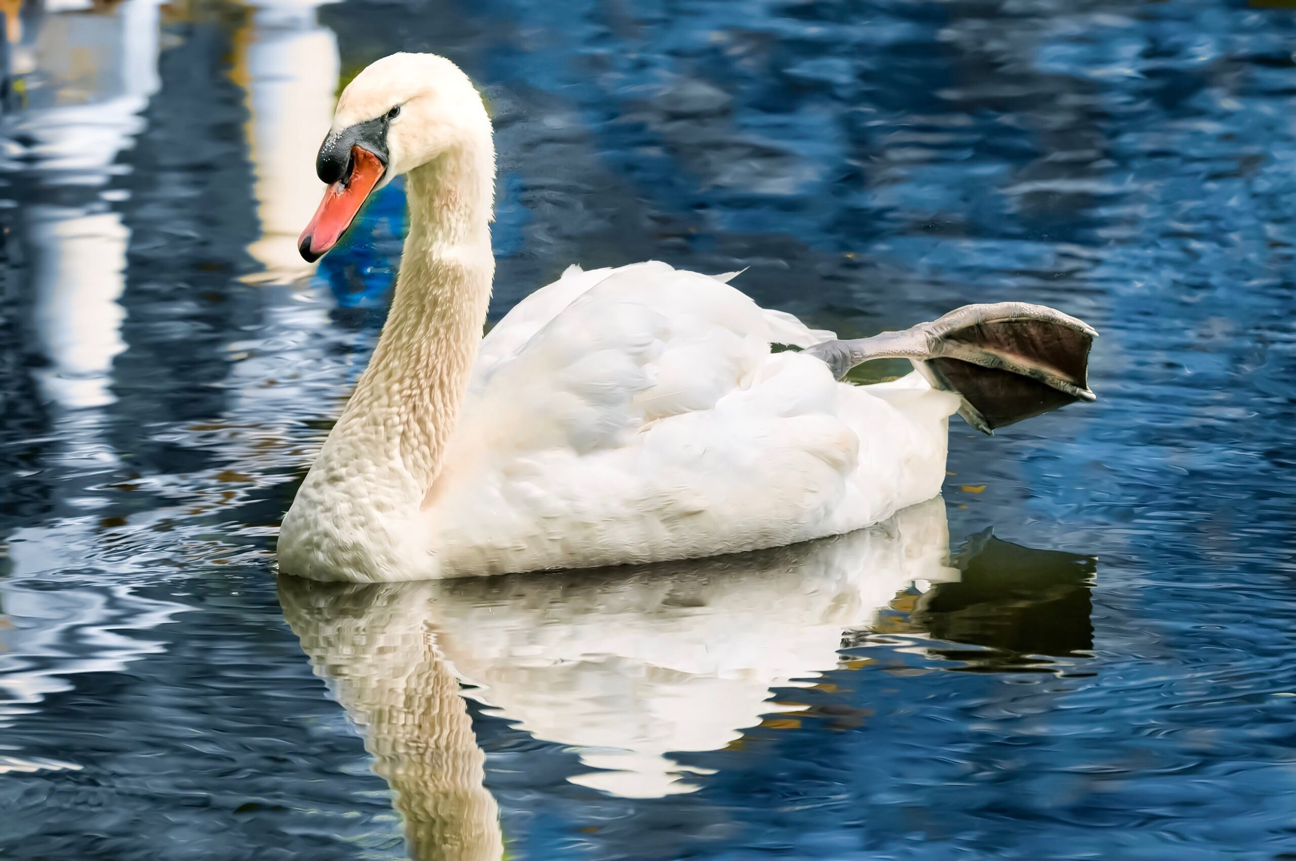 animals in the wild, animal themes, one animal, lake, water, white color, swan, swimming, water bird, reflection, nature, bird, no people, day, animal wildlife, waterfront, outdoors, beak, close-up