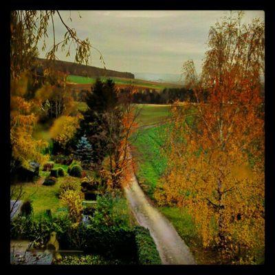 Sklfirma Landscape