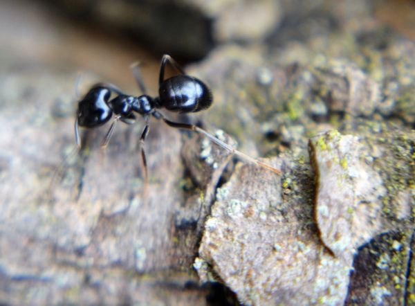 Animal Themes Animals In The Wild Ant Close-up Nature No People One Animal Outdoors