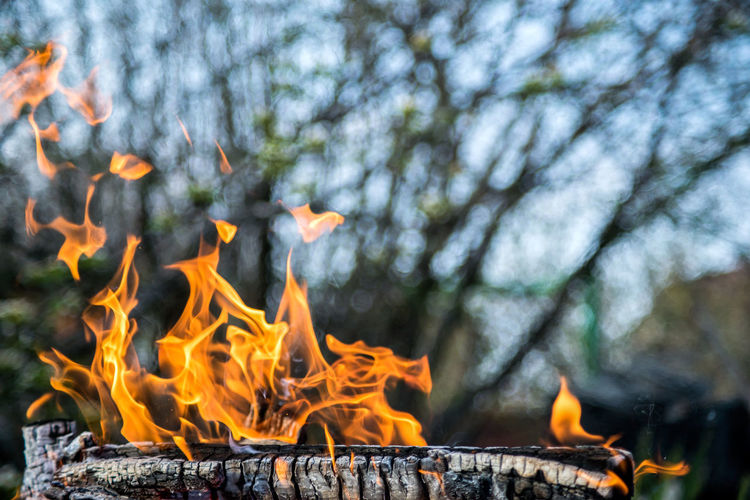 Close-up of bonfire on wood against trees