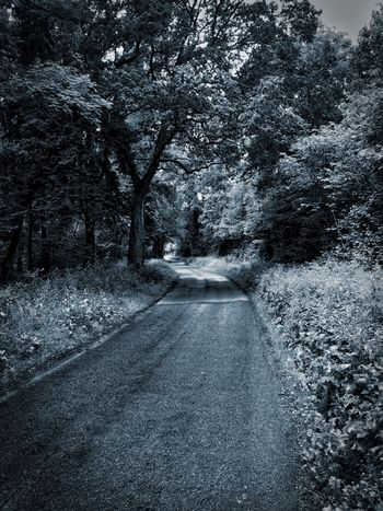 Country road Beauty In Nature Day Diminishing Perspective Flowing Flowing Water Forest Growth Idyllic Motion Narrow Nature No People Non Urban Scene Non-urban Scene Outdoors Plant Remote Scenics Stream The Way Forward Tranquil Scene Tranquility Tree Vanishing Point Water