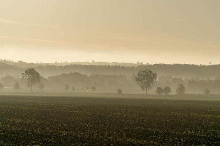 Braun Bäume Feld Field GERMANY🇩🇪DEUTSCHERLAND@ Heaven Himmel Nature Nebel Schaumburg Sonnenuntergang Vornhagen Baum Brown Fog Niedersachsen Sky Sunshine EyeEmNewHere