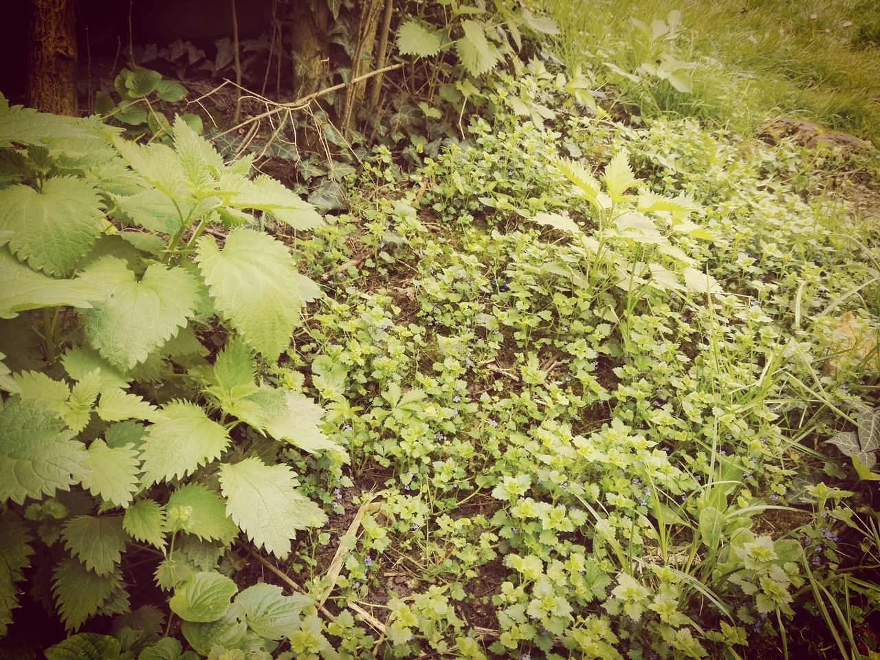 growth, plant, nature, green, leaf, no people, green color, tranquility, beauty in nature, day, outdoors, close-up, freshness