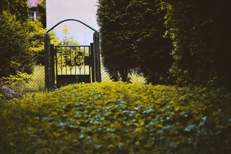 Nature gate Photooftheday Holidays Vintage Travel View Colors Nature Leaf Wall Plant Autumn Sunlight Landscape Spring Branch Evening Magic Tree Park - Man Made Space Sky Grass Green Color Jungle Gym Playground Gate Blooming Plant Life Outdoor Play Equipment