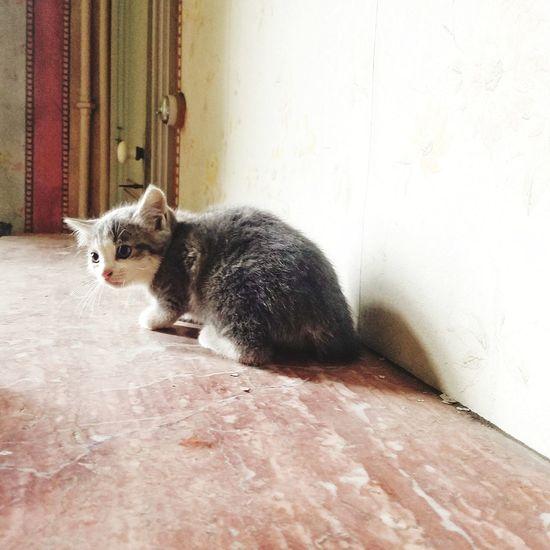 wild cat Pets