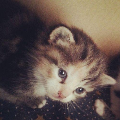 Quanto ti voglio! ? Instracat Instracats Instraloveyou Instralove love cats cat instragood instrasmile instralife likeforlike likesforlikes follow followme