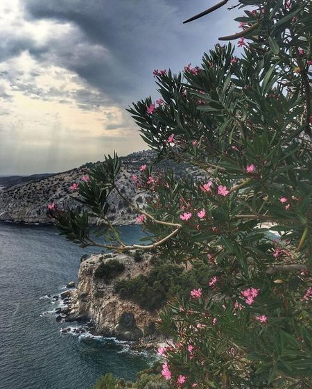 Greece Thassos Islandlife Breathtaking View Sea Sky Flowers Landscape Holiday Relax Peace And Quiet Enjoy Happiness Justwow Vitaminsea Everythingandmore