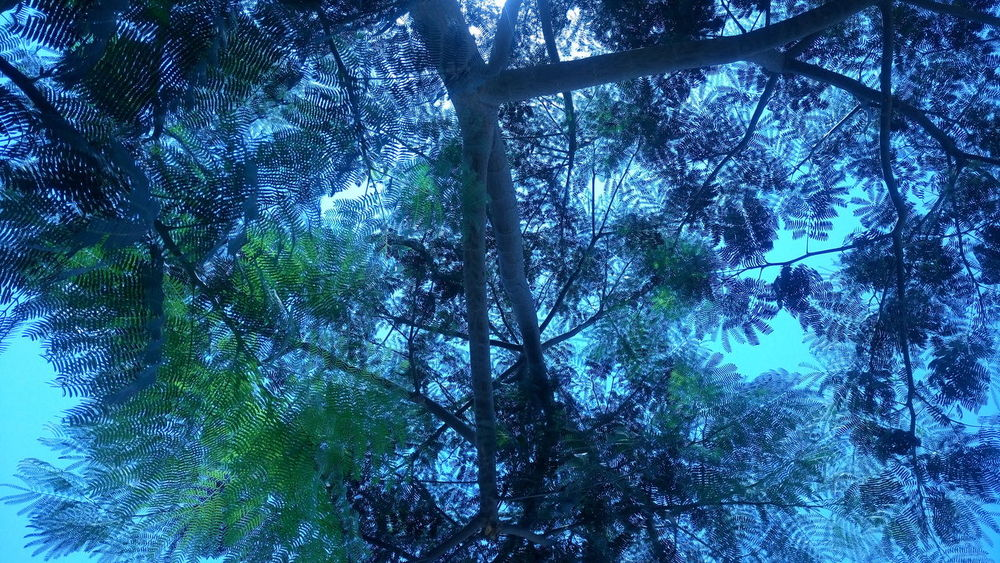 Plant Plants Plants 🌱 Trees And Sky Tree Green Green And Blue No Edit No People